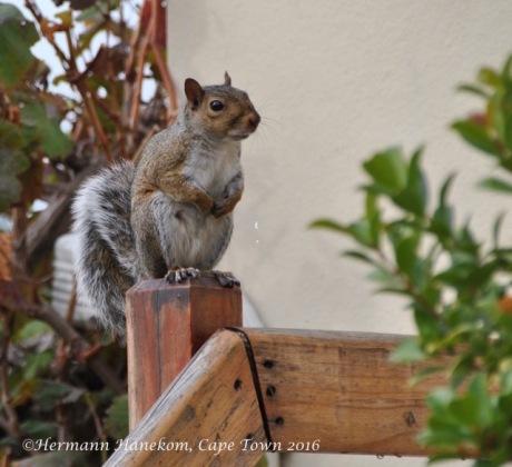 Autumn squirrel 1